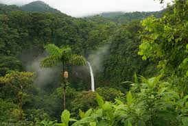 Deštný prales